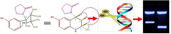 anticancer studies of tetrahydroquinolines
