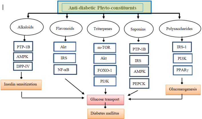 Mechanism of anti-diabetic compounds