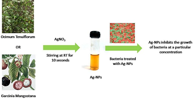 silver nanoparticles using ocimum tenuiflorum