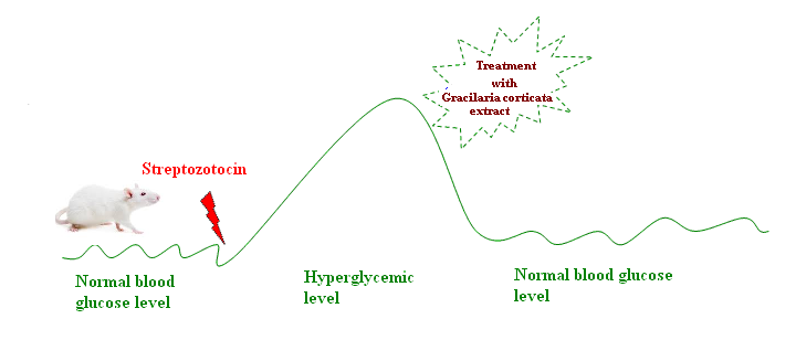Antidiabetic effect of Gracilaria corticata extract