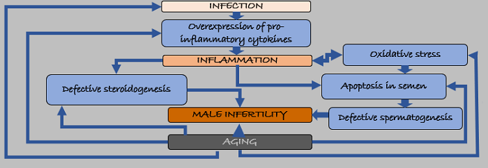 nflammation and infertility
