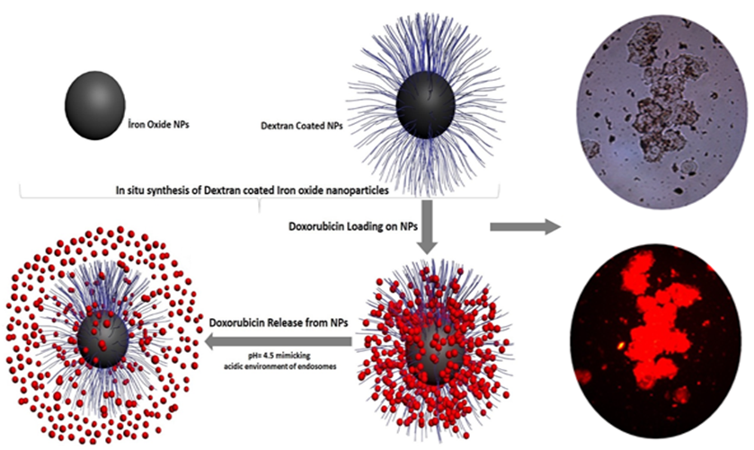 Dextran magnetic nanoparticles