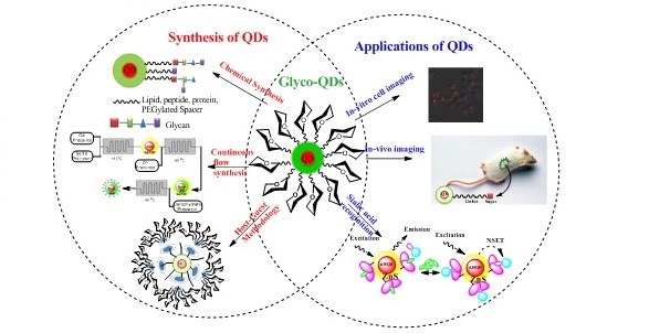 sugar capped Quantum Dots