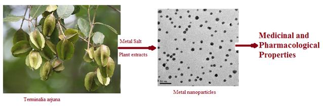 arjuna plant nanoparticles