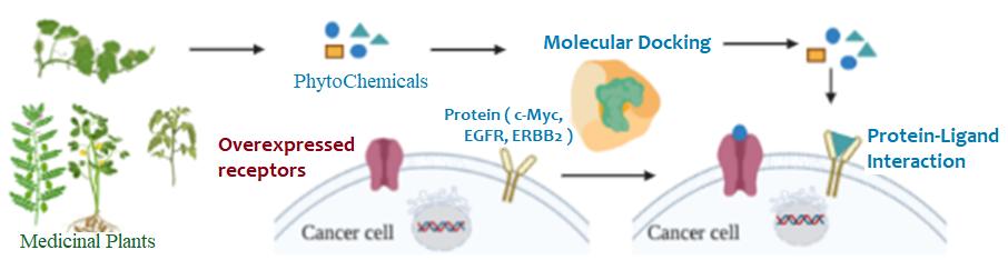 molecular modeling of plant drugs