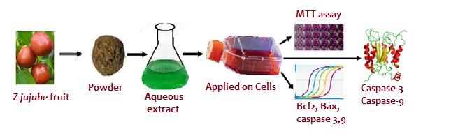 mechanism of anticancer activity of ber