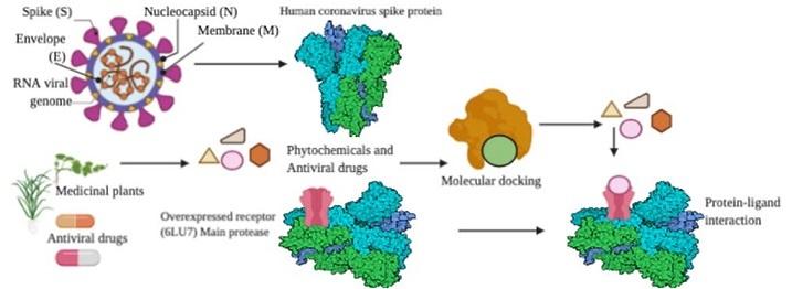 COVID-19 inhibitor modeling