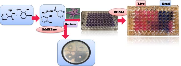 Schiff bases against Mycobacterium