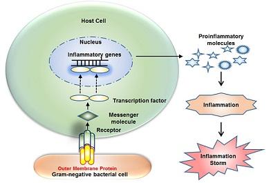 protein antibacterials