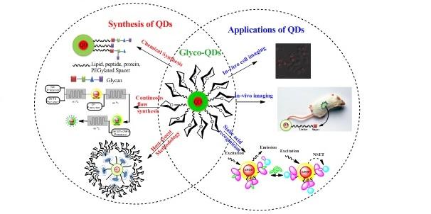 sugar capped Quantum Dots