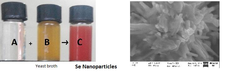 selenium nanoparticles from yeast