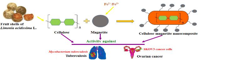 cellulose-magnetite nanocomposites